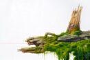 [R] Asleep in the moss