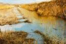[R] Flooded spring stream